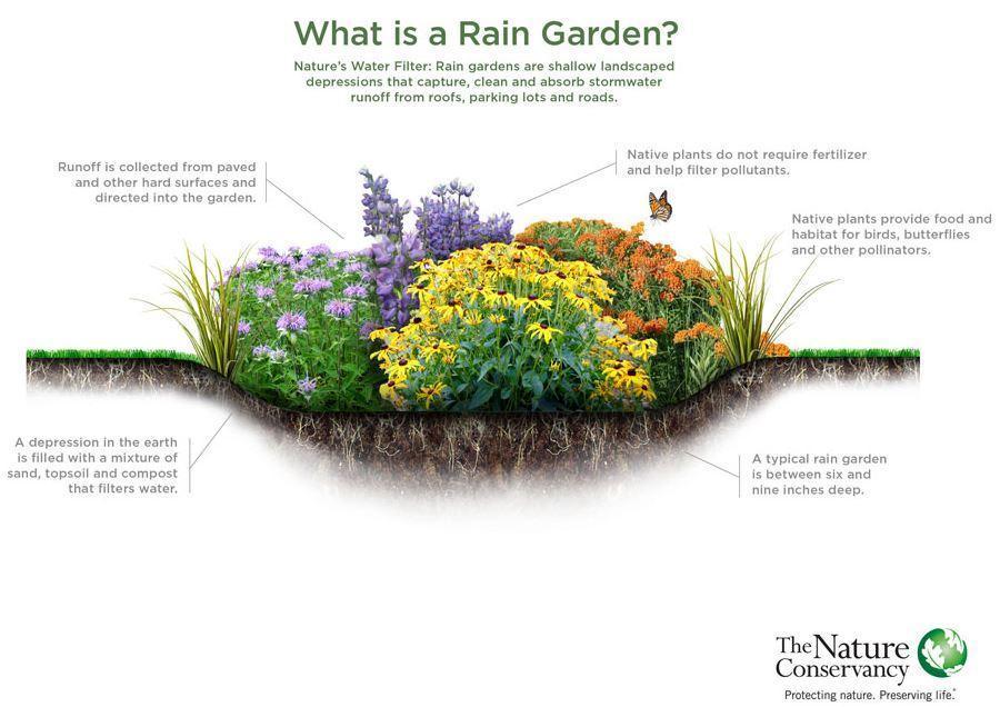 Capture rain garden NC